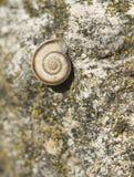 Schnecke auf Felsen stockbild
