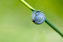 Schnecke auf Gras Stockfoto