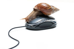 Schnecke auf Maus Stockfoto