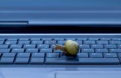 Schnecke auf Tastatur Stockbild
