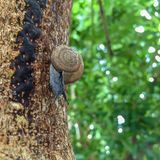 Schnecke auf unscharfem Hintergrund des Baums Grün lizenzfreies stockbild