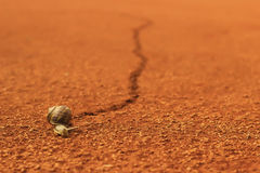 Schnecke, die über Tennisplatz läuft Lizenzfreies Stockfoto