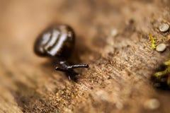 Schnecke, die auf dem Holz gleitet Stockfotos