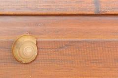 Schnecke, die auf Holztür kriecht. Stockbilder