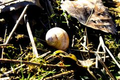 Schnecke, die einen nass Boden weitergeht lizenzfreies stockfoto