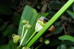 Schnecke, die gelben Blütenstaub isst Stockfotos