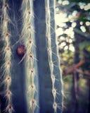 Schnecke in einem Kaktus Stockfoto