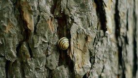 Schnecke in einem Oberteil auf der Barke eines Baums stock video footage