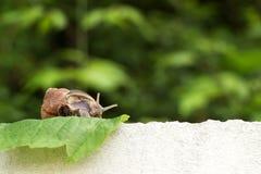 Schnecke im Garten auf dem Gras Lizenzfreie Stockfotos