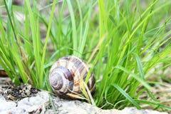 Schnecke im Gras Stockfoto