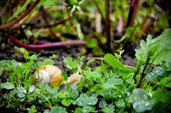 Schnecke im Gras Lizenzfreies Stockfoto
