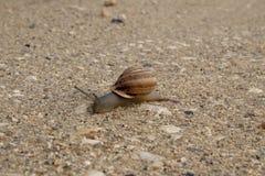 Schnecke im Sand stockfotos