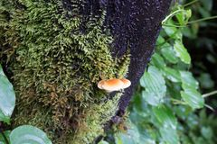 Schnecke kriecht auf Baum, dass voll von der grünen Moosanlage lizenzfreies stockbild