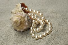 Schnecke mit Perlen Stockbilder