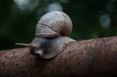 Schnecke, nett, langsam, Natur, Rohr, Tier, Bewegung, Wald Stockfoto