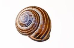 Schnecke-Shell Stockbilder