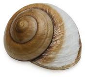 Schnecke-Shell Lizenzfreie Stockbilder