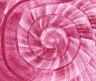 Schnecke, Spirale formte hochroten Hintergrund lizenzfreie abbildung