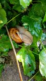 Schnecke Stock Images