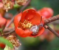 Schnecke und Blume stockfoto