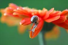 Schnecke und Blume mit Tröpfchen im Naturhintergrund Stockfoto