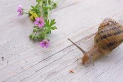 Schnecke und Blumen Stockbilder