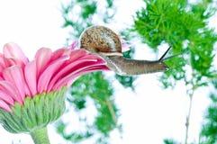 Schnecke und Blumen Stockbild
