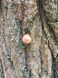 Schnecke und Flechte auf der Barke des Baums lizenzfreies stockfoto