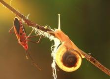Schnecke und Insekt Stockbilder