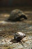 Schnecke und Schildkröte Stockbild