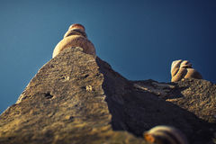 Schnecken auf Felsen Stockfoto