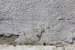 Schnecken, die auf einer alten schroffen Wand schlafen stockfotos