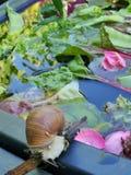 Schnecken und Gemüse Stockfotos