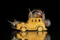 Schnecken und Spielzeugauto Stockfoto