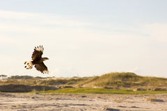 Schneckendrachen auf dem Strand Stockbild