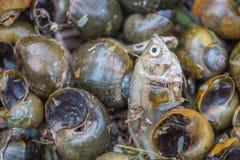 Schneckenkarkasse und Todesfische Lizenzfreie Stockfotografie
