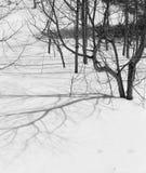Schnee lizenzfreie stockfotos