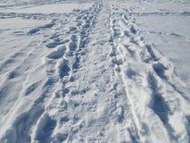Am Schnee Lizenzfreies Stockfoto
