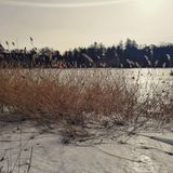 Schnee, Lizenzfreies Stockfoto
