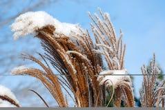 Schnee-Abdeckung Stockfotografie