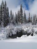 Schnee abgedeckte Bäume, Nebenfluss und Teich Lizenzfreie Stockfotos