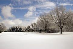 Schnee abgedeckte Feldbäume und -wolken Stockfoto