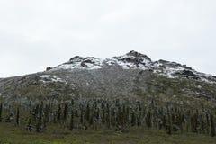 Schnee-abgewischte Landschaft Stockfotografie