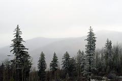 Schnee-abgewischter Gebirgswald Lizenzfreies Stockfoto