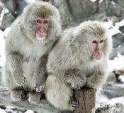Schnee-Affe stockbilder