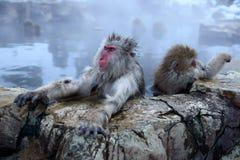 Schnee-Affe Lizenzfreies Stockbild