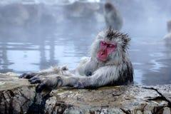 Schnee-Affe Stockfoto
