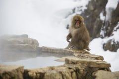 Schnee-Affe auf Rand von heißen Quellen Stockfotografie