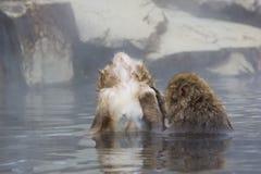 Schnee-Affe-Grenzzustand des Entspannung im Dampf Stockbilder