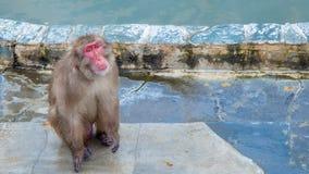Schnee-Affe im Affe-Badekurort Lizenzfreie Stockbilder